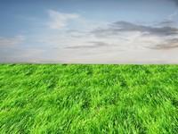 Wild grass 25