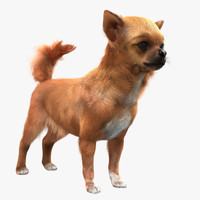 chihuahua fur 3d model