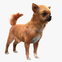 chihuahua fur 3d max