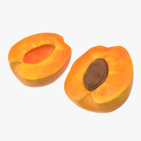 3d apricot cross section model