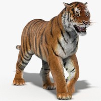 3d model tiger fur animation cat