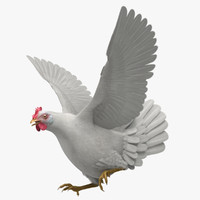 3d model gallus domesticus white domestic