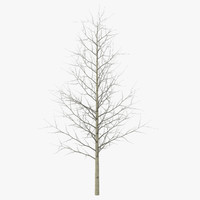 young yellow poplar tree 3d max