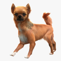 3d chihuahua rigged model