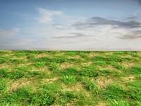 Wild grass 26