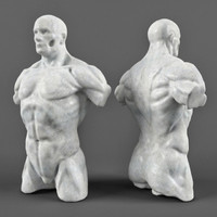 3d male anatomy muscular
