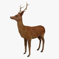 3d deer ready rig model