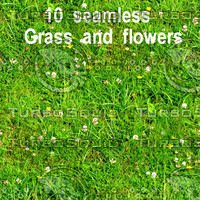 Grass And Flowers Collection 1