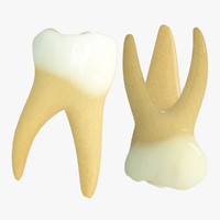 3d primary molars model