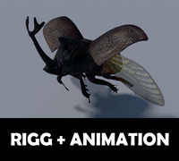 3d rhinoceros beetle model