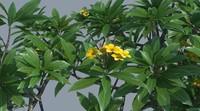 nature tree flowering max