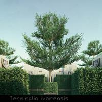6 tree 3d model