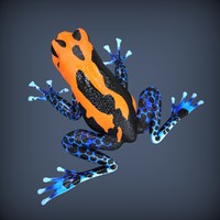 3d realistic poison frog rigged model