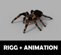 3d model spider tarantula