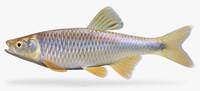 fbx cyprinella spiloptera spotfin shiner
