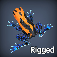 realistic poison frog rigged 3d model