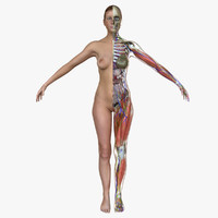 3d model ultimate complete female anatomy