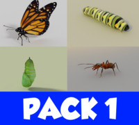 3d insect pack 1
