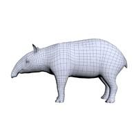 3d tapir model