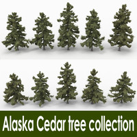 Alaska Cedar tree collection