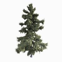 alaska cedar tree 3ds