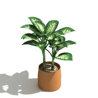 3d tropical indoor plant dumb model