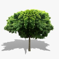 realistic tree v1 3d model