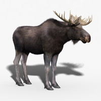 3d model moose fur