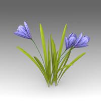 Flower Crocus