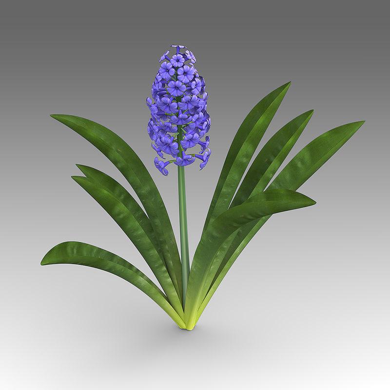 wildflowers_wfa_005_Hyacinthus_01.jpg
