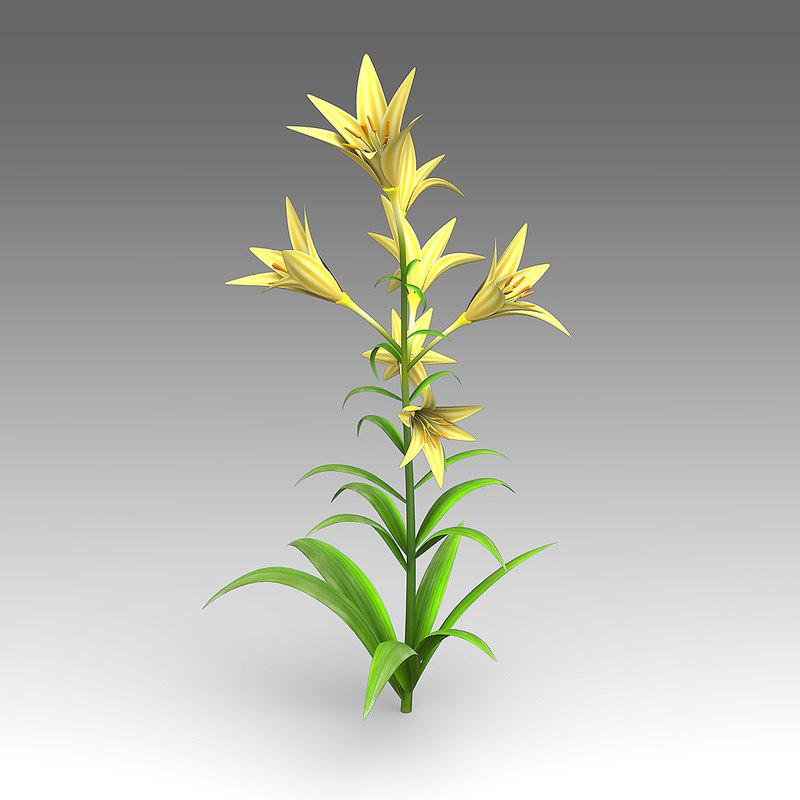 wildflowers_wfa_007_Lilium_01.jpg