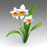 3d narcissus flower