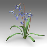 scilla flower 3d model
