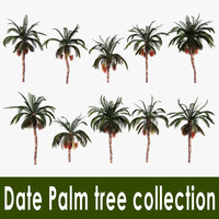 Date Palm tree collection