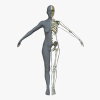 female skeleton skin 3d obj