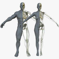 male female skeleton skin 3d model