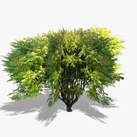 3d model realistic tree v3