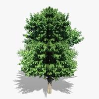 tree v4 3d model