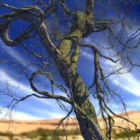 leaf season tree max