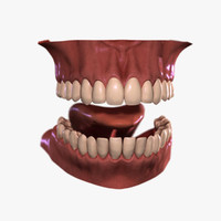 3d model realistic mouth teeth