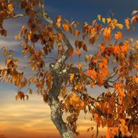 3ds max leaf season tree