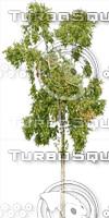 tree115