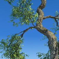 leaf season tree 3d x