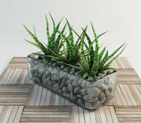 haworthia succulent set in vase