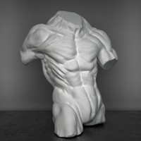 male anatomy muscular 3d max