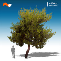 Cut Out Tree M 3