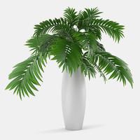 plant chrysalidocarpus lutescsns 3d model