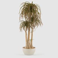 nolina plant pot 3d max