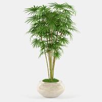 maya plant pot palm tree