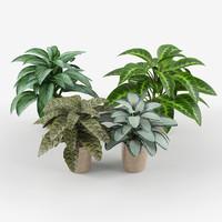 3d calathea flower plant pot